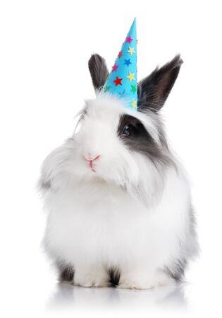생일 모자를 든 흑백 토끼 스톡 콘텐츠