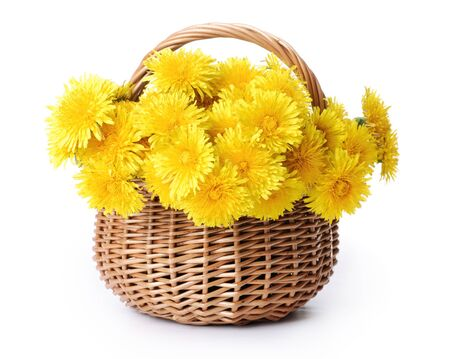 Dandelions in a basket. Isolated over white.