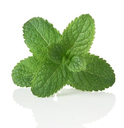 menta: Menta verde. Aislado en blanco