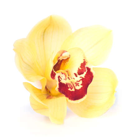 Yellow Orchid close up. Isolated over white photo