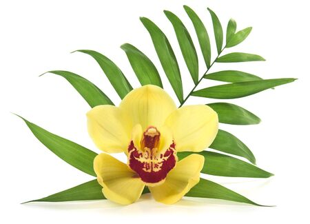 Palm leaf and yellow orchid. Isolated over white Фото со стока