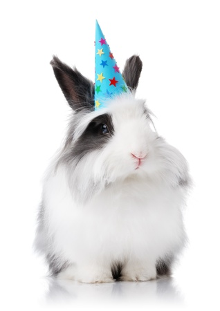 Black and white rabbit with a birthday hat on