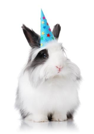 lapin blanc: Lapin noir et blanc avec un chapeau anniversaire sur