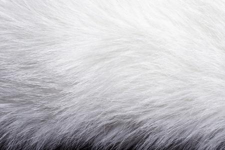 Closeup of white fur background texture photo