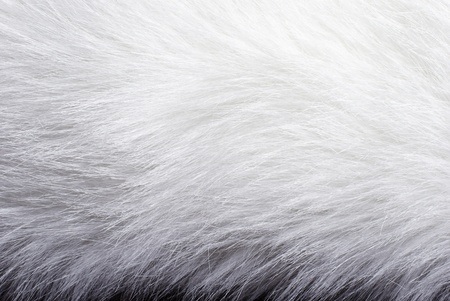 Closeup of white fur background texture Stock Photo - 9009894