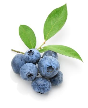 Close up of a blueberry twig Standard-Bild