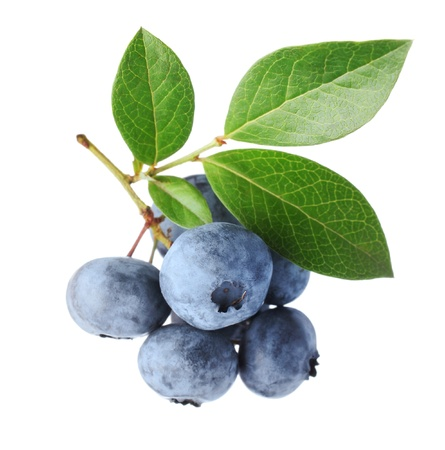 Blueberry twig
