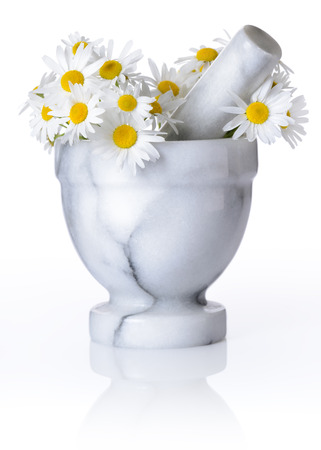 Medicine Camomile flowers on white  photo