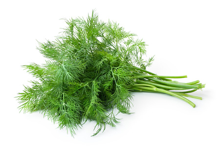 Fresh Dill (herb)  bunch. Isolated on white
