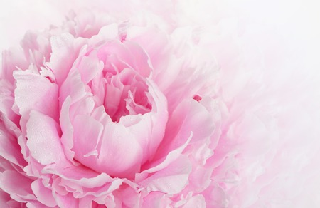 Beautiful pink peony background in vintage style Stock Photo