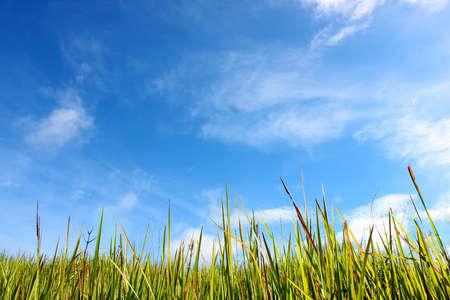 Ciel nuageux et herbe