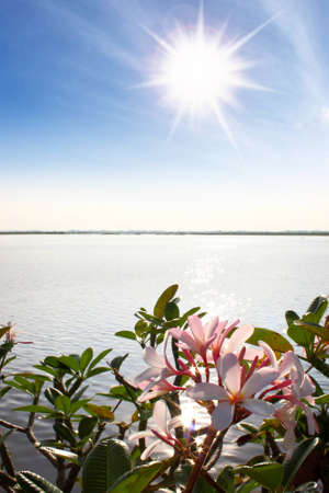 frangipani flowers by the lake ,sky and sun photo