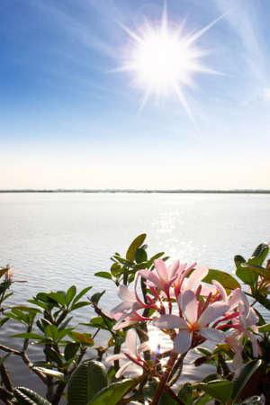 sun flower: frangipani flowers by the lake ,sky and sun Stock Photo