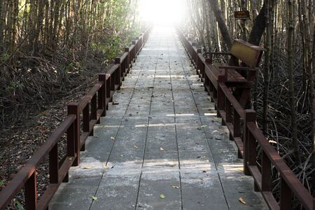 passages: Passages in forest of Phetchaburi, Thailand