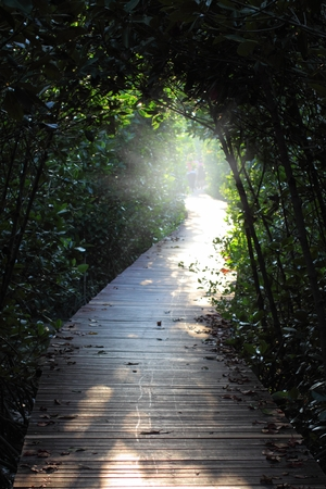 wooden walkway for nature study in mangrove photo