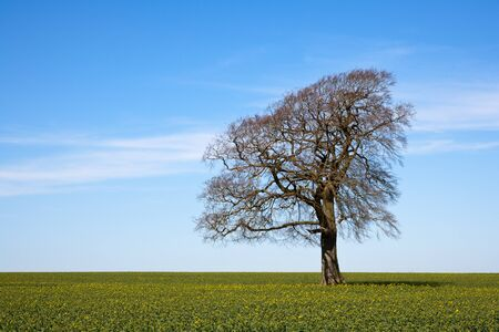 away from it all: A single tree stands leafless in early spring sunshine under a blue sky
