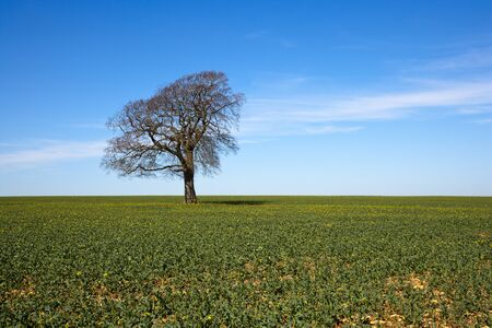 A single tree stands leafless in early spring sunshine under a blue sky