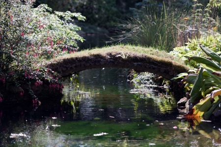 conquered: Japanese Garden - Bridge conquered by nature in unspoilt surroundings