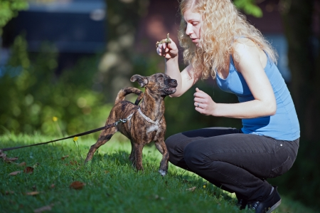 exploratory: Young Woman with curious mixed breed on swing