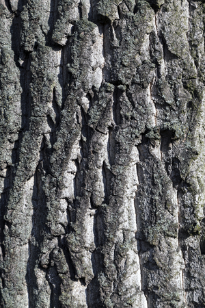 Erft in Neuss, shore area, Birch Bark Stock Photo
