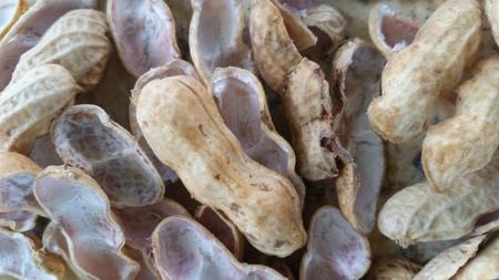fabaceae: Fabaceae bean