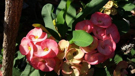 specialize: flower cuts, and we specialize in orchid flower cuts of Thailand.