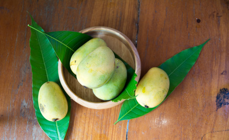 hintergrund gr�n gelb: Mango Blume, gr�n, gelb Lizenzfreie Bilder