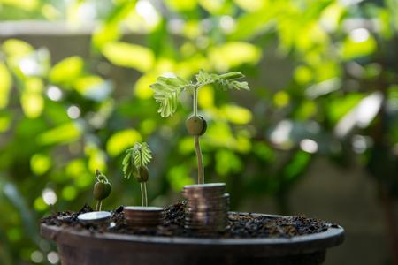 pellet: Pellet plants are grown Stock Photo