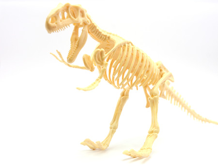 paleontology: isolated,bone,stone,paleontology,natural,white,science,rex,dead,skull,dinosaur,fossil,jurassic,tyrannosaurus,history,skeleton,prehistoric,ancient,background,old,big,monster,museum,animal,dinosaur bones Stock Photo