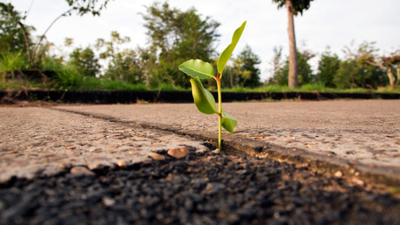 plant seed: Seeding Plant seed growing step concept