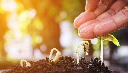 seed, evolution, germination