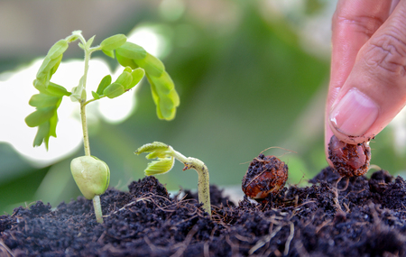 seed to tree, Seeding, Plant seed growing concept, Farmers hand planting a seed in soil
