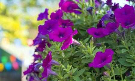flowers in the garden Banco de Imagens
