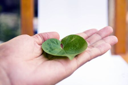 hand holding a green  heart