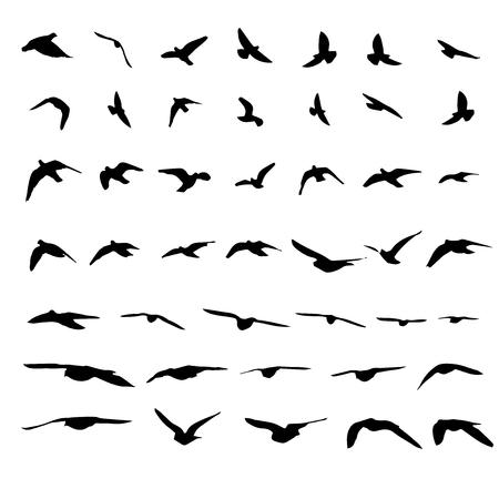 Flying birds and silhouettes on white background. Vector illustration. isolated bird flying. Ilustração