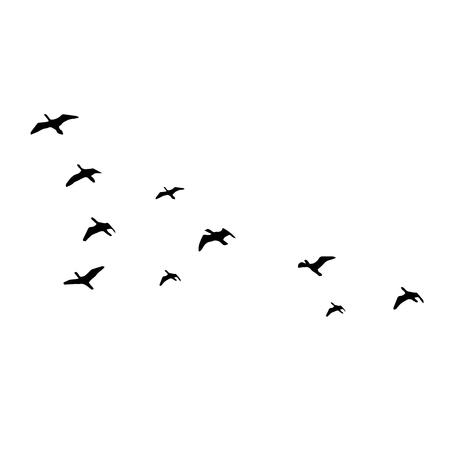 흰색 배경에 실루엣을 비행. 벡터 일러스트 레이 션. 격리 된 조류 비행입니다.