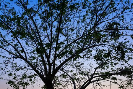 Beautiful silhouette tree branch on sky sunset background.