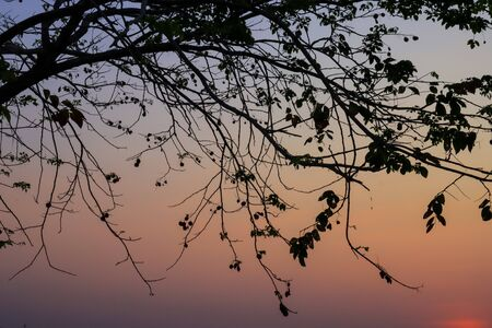 Beautiful silhouette tree branch on sky sunset background. Stock Photo