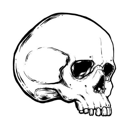 menschlicher Schädel-Vektor-Illustration. Hand zeichnen Strichzeichnungen anatomisch korrekte menschliche Schädel isolierte Vektorillustration. Tattoo-Design. Symbol des Lebens.