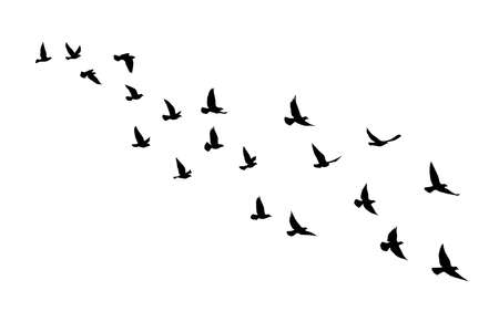 Flying birds silhouettes on isolated background. Vector illustration. isolated bird flying. tattoo and wallpaper background design. bird fly and geometric shapes.
