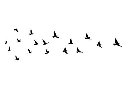 Flying birds silhouettes on isolated background. Vector illustration. isolated bird flying. tattoo and wallpaper background design.
