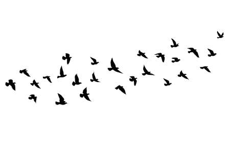 Flying birds silhouettes on isolated background. Vector illustration. isolated bird flying. tattoo and wallpaper background design. sky and cloud with fly bird. color shade palette.