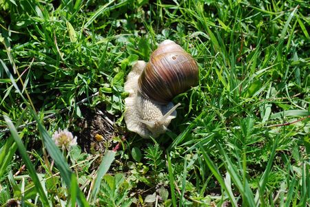 Big snail in shell crawling on road, summer day in garden