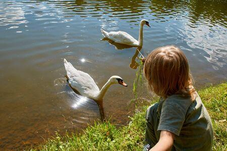 lake beach: Little boy kid child having fun feeding swan on beach lake Stock Photo