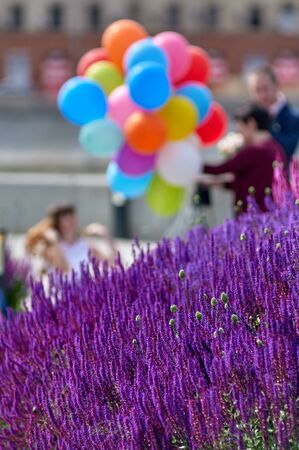 vacationers: lavender lawn on the Crimean embankment. Moscow, Russia. in the background are vacationers tourists out of focus
