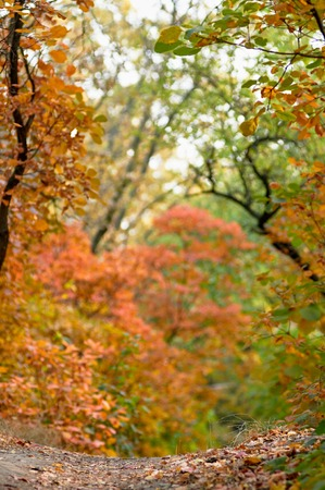 bordered: the lower part of the picture bordered autumn blurred background Stock Photo