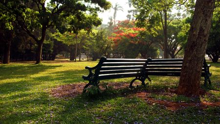 A lone park bench in a botanical garden park Stock Photo - 4712748
