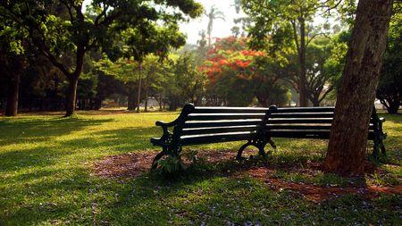 banc parc: Un seul banc de parc dans un jardin botanique du parc