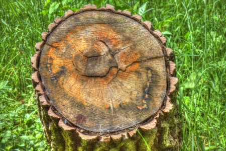 holz: Sawed-off tree