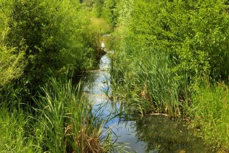 wasser: Wuhle river in Berlin